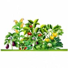 植物种植设计