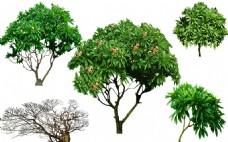 园林景观树PSD素材