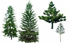 常用景观树环境设计景观素材