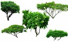 花草树木景观素材图片