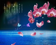 梦幻蝴蝶兰背景墙