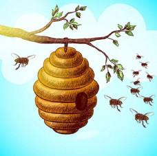 手绘蜂窝蜜蜂插图