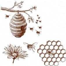 手绘蜜蜂蜂窝蜂蜜插图
