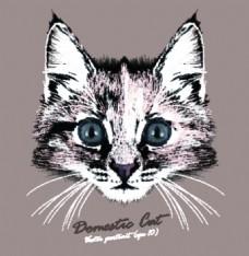 可爱猫咪宠物猫头像品种矢量