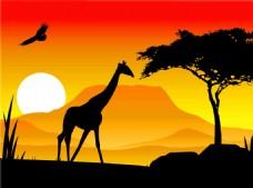 日出长颈鹿绿树图片