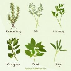 手绘植物品种