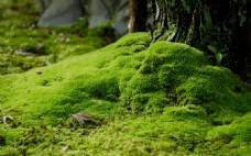 大自然苔藓植物微景观