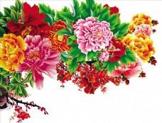 花开富贵  牡丹花
