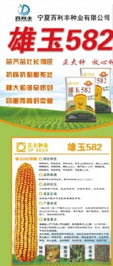 农业玉米种子