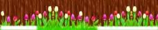 木纹郁金香