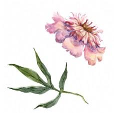 水彩花卉植物