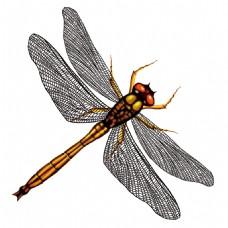 高清唯美蜻蜓静态素材